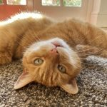 7 tips to take great phone pictures of your pet